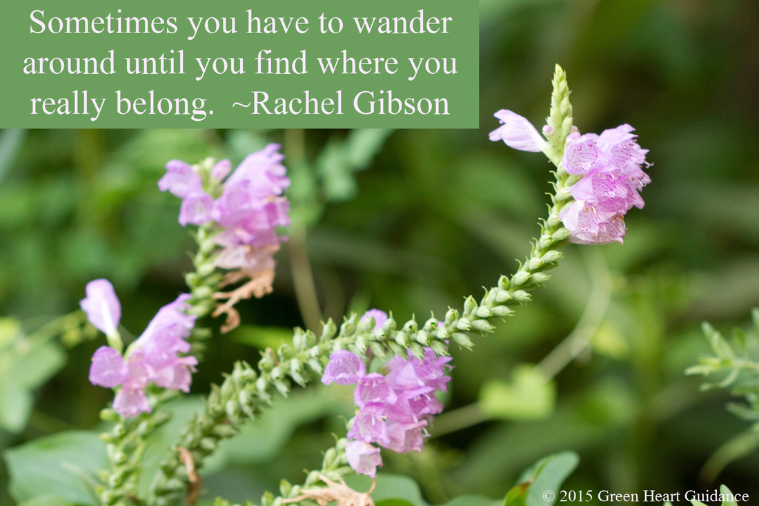 Sometimes you have to wander around until you find where you really belong. ~Rachel Gibson