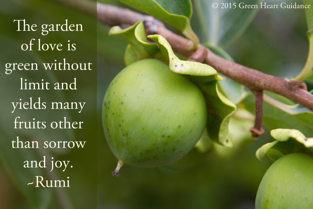 The garden of love is green without limit and yields many fruits other than sorrow and joy. ~Rumi