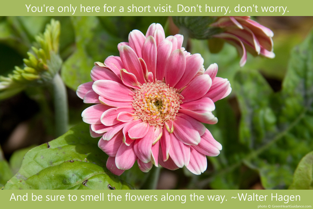 You're only here for a short visit. Don't hurry, don't worry. And be sure to smell the flowers along the way. ~Walter Hagen