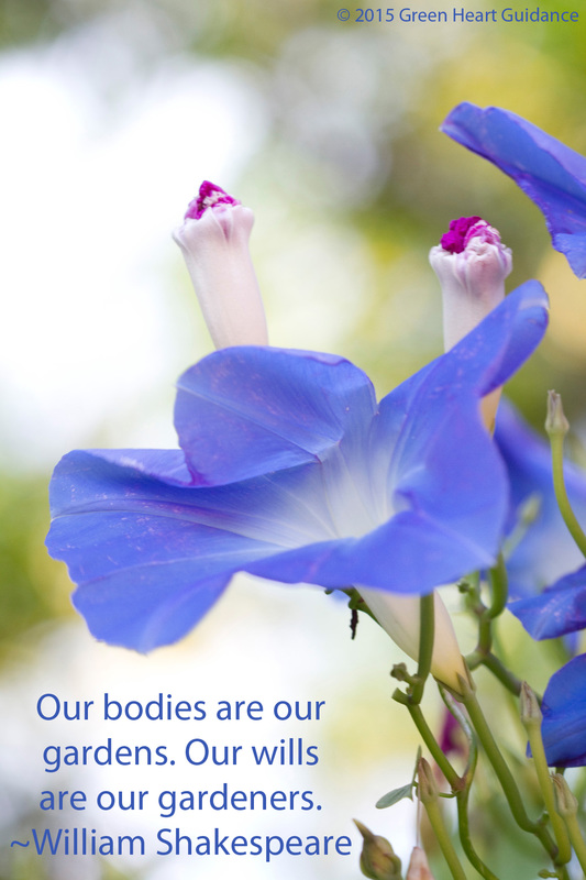 Our bodies are our gardens. Our wills are our gardeners. ~William Shakespeare