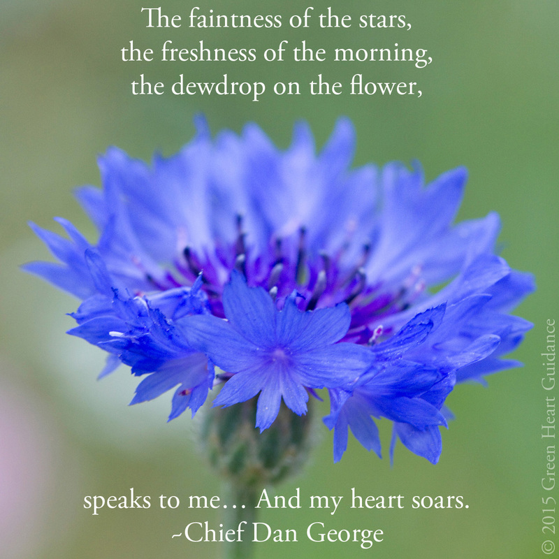 The faintness of the stars, the freshness of the morning, the dewdrop on the flower, speaks to me... And my heart soars. ~Chief Dan George