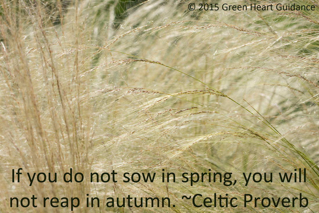 If you do not sow in spring you will not reap in autumn. ~Celtic Proverb