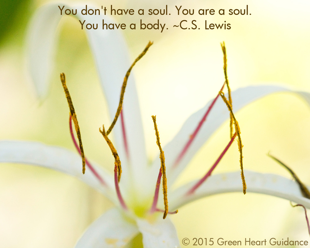 You don't have a soul. You are a soul. You have a body. ~C.S. Lewis